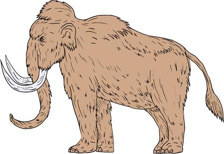 Teken schetsstijl illustratie van een wolle mammoet, Mammuthus primigenius, een prehistorische olifant die leefde tijdens de Pleistocene-periode en een van de laatste mammutsoorten die vanaf de zijkant gezien werden op een geïsoleerde witte achtergrond.