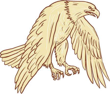 oiseau dessin: Dessin illustration de style croquis de vol d'aigle à tête blanche avec des ailes vers le bas vu de l'ensemble latéral sur fond blanc isolé.