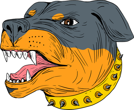 Drawing sketch style illustration of an aggressive Rottweiler Metzgerhund mastiff-dog guard dog head showing teeth set on isolated white background.