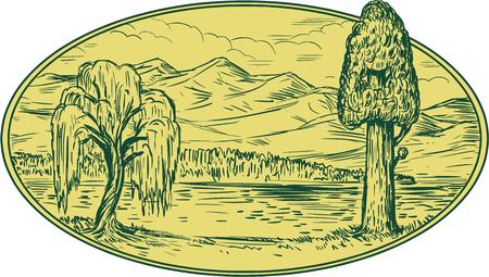 Tekening schetsstijl illustratie van een wilg en sequoia boom met meer en bergen op de achtergrond in ovale vorm.