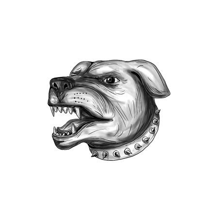 Tattoo-Stil Illustration eines Rottweiler Metzgerhund Mastiff-Hund Guard Hund Kopf zeigt Zähne knurren auf weißem Hintergrund isoliert. Standard-Bild - 77627440