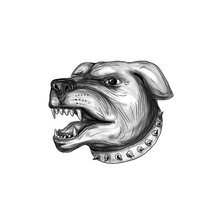 teeth white: Tattoo style illustration of a Rottweiler Metzgerhund mastiff-dog guard dog head showing teeth growling set on isolated white background.