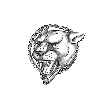 Tattoo style illustration of a lioness growling with rope in the background set on isolated white background.