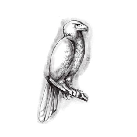 L'illustrazione di stile del tatuaggio dell'australiano dell'Aquila o del bunjil dell'Aquila cuneo-munito australiano, a volte conosciuta come il eaglehawk, la più grande rapace in Australia si è appollaiata su un ramo osservato dalla sporgenza laterale su fondo bianco isolato. Archivio Fotografico - 77438501