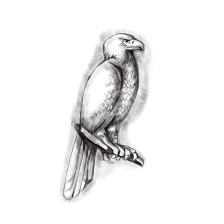 Tattoo style illustration of an Australian wedge-tailed eagle or bunjil Aquila audax, sometimes known as the eaglehawk, the largest bird of prey in Australia perched on a branch viewed from the side set on isolated white background.  Stock Photo