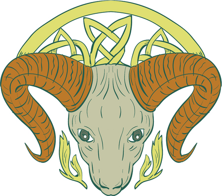 Illustration of stylized ram bighorn mountain goat head with Celtic knot, called Icovellavna, plait work or knotwork woven into unbroken cord design viewed from front set on isolated white background.