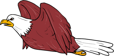 飛ぶハクトウワシのイラストは、漫画のスタイルで行われる分離の白い背景の設定側から見た。