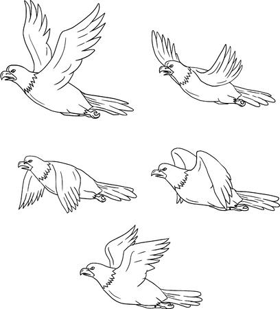 翼は、羽ばたき飛ぶ鷲のイラストのコレクション セットは、漫画のスタイルで行われるさまざまな動きで表示。