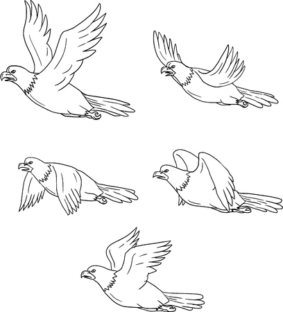 Collection set of illustrations of an eagle flying with wings flapping viewed in different movements done in cartoon style.