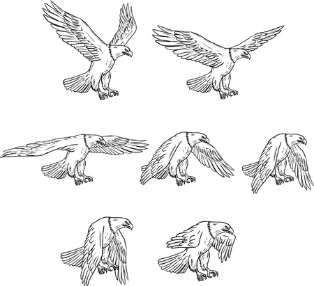 Collection set of illustrations of bald eagle flying with wings flapping viewed in different movements done in drawing sketch style.