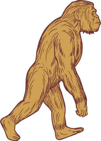 Drawing sketch style illustration of Homo habilis, a species of the tribe Hominini, during the Gelasian and early Calabrian stages of the Pleistocene period walking viewed from the side set on isolated white background. Illustration