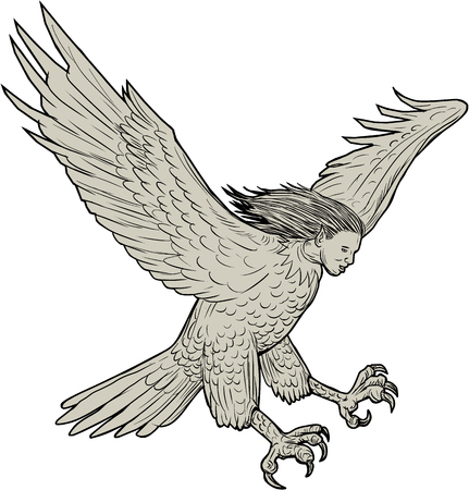 Drawing sketch style illustration of a harpy, in Greek and Roman, mythology, a female bird with a womans face swooping looking down viewed from the side set on isolated white background.