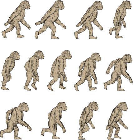 ホモ ハビリス、スケッチ スタイルを図面で行う分離の白い背景の設定側から見たゲラシアン初期更新世期歩行のカラブリア中 Hominini、族の種のイラ