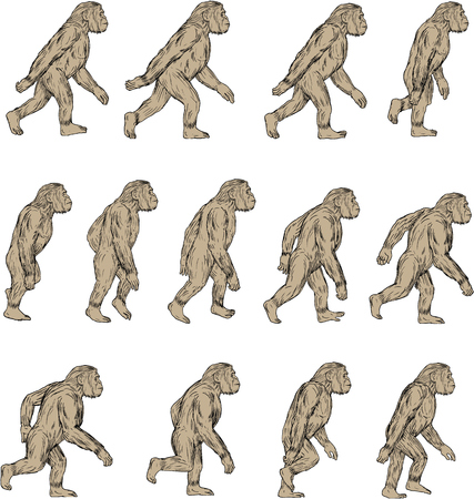 Collection set of illustrations of Homo habilis, a species of the tribe Hominini, during the Gelasian and early Calabrian stages of the Pleistocene period walking viewed from the side set on isolated white background done in drawing sketch style.