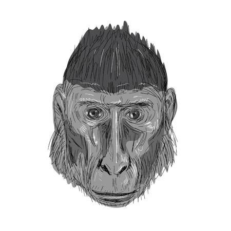 紋付き黒サル頭で正面を向いてのイラストは手で行う描画スタイルをスケッチします。