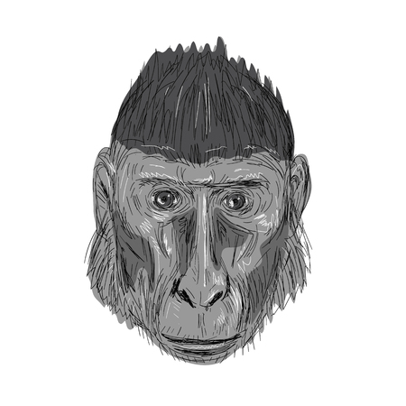 Illustration of Crested Black Macaque Head facing front done in hand sketch Drawing style.