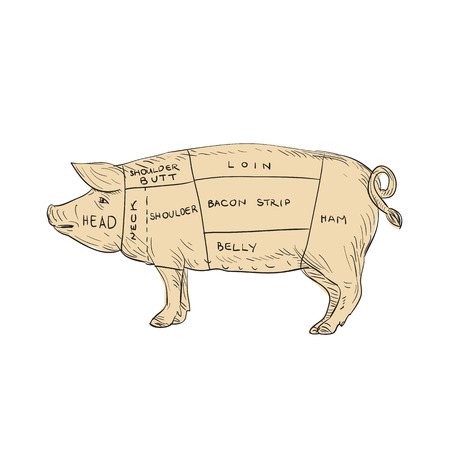 Illustration of a Vintage Pork Meat Cut Map done in hand sketch Drawing style.