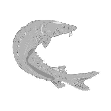 Illustratie van een Lake Sturgeon Zwemmen gedaan in handschets Tekenstijl. Stock Illustratie