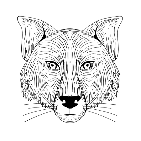 Illustration of a Fox Head Front view done in hand sketch Drawing style. Illustration