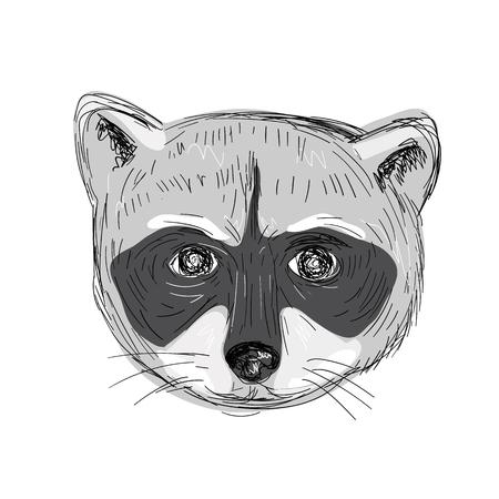 Illustratie van een Wasbeerhoofd Vooraanzicht gedaan in handschets Tekenstijl.