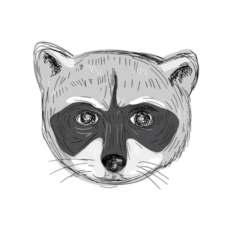 Illustration of a Raccoon Head Front view done in hand sketch Drawing style.