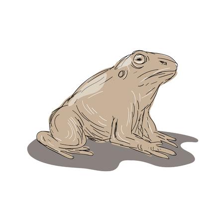 座っているヒキガエル カエルのイラストは、描き方で行う側から見た。