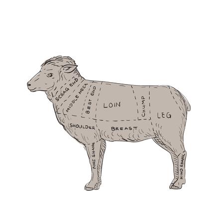 Illustratie van een Vintage Lamsvleesgesneden Kaart gedaan in handschets Tekenstijl.