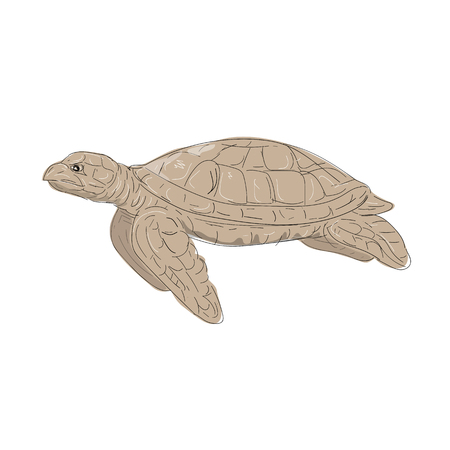 Illustration of a Hawksbill Sea Turtle swimming viewed from Side done in hand sketch Drawing style. Illustration