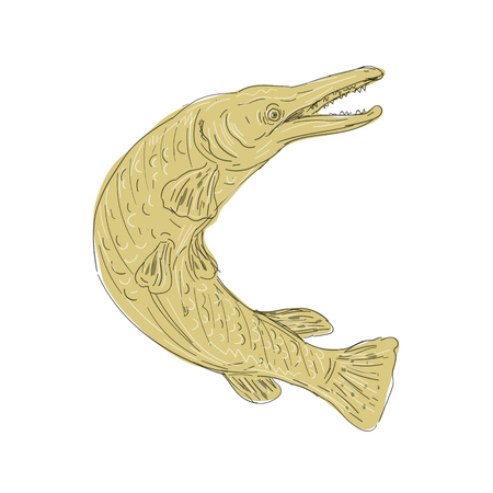 Illustration of an Alligator Gar Fish Swimming Up done in hand Drawing sketch style on isolated background.