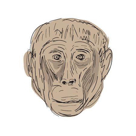 ゲラダヒヒ猿の頭のイラスト表示前面手スケッチの描画スタイルで行われます。  イラスト・ベクター素材