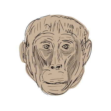 Illustration of a Gelada Monkey Head viewed from front done in hand sketch Drawing style.