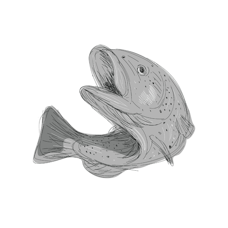 Illustration of a Cutthroat Trout Jumping done in hand sketch Drawing style.