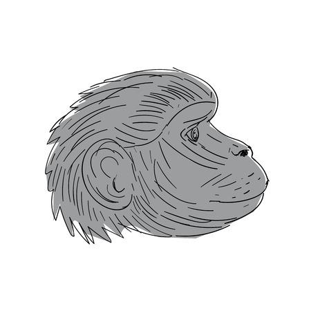 図面スケッチ スタイルで行うゲラダヒヒ猿頭側面図のイラスト。