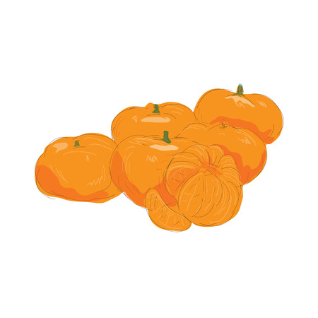 Illustration of Mandarin Orange Fruit Peeled done in Watercolor style.