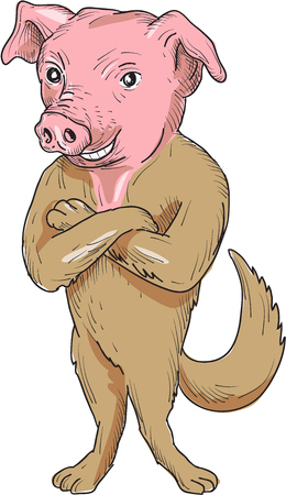 Illustration of a pig head with a dog body standing with arms crossed viewed from front set on isolated white background done in cartoon style.  Ilustrace