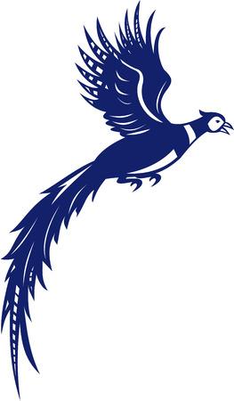 Illustratie die van fazantvogelhoen Phasianinae vliegen die van de kant wordt bekeken op geïsoleerde witte die achtergrond wordt geplaatst in retro stijl wordt gedaan.
