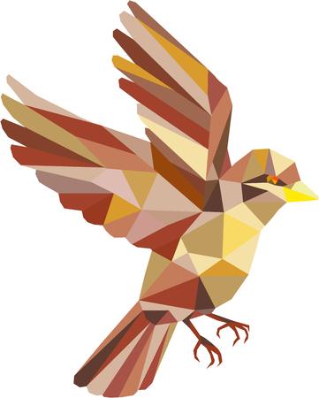 격리 된 흰색 배경에 측면에서 볼 비행 참새의 낮은 다각형 스타일 그림.