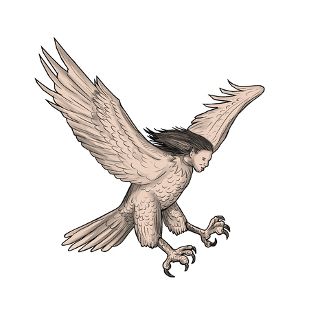 Tattoo style illustration of a harpy, in Greek and Roman, mythology, a female bird with a womans face swooping looking down viewed from the side set on isolated white background.