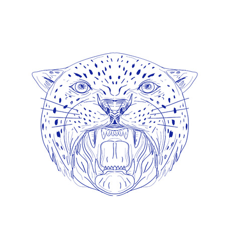 Illustration of an Angry Jaguar, panther, leopard, wildcat, big cat Head showing its Fangs viewed from front done in hand drawn, sketch Drawing style.