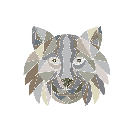 Illustration of a Lynx Cat wild cat Head viewed from front done in Low Polygon style. Ilustração