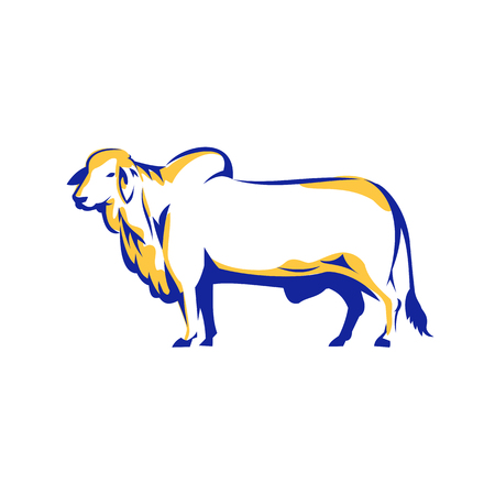 Illustratie van een Brahman-Stier Zijaanzicht over geïsoleerde witte die achtergrond in Retro stijl wordt gedaan.
