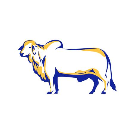 Illustration eines Brahman-Stiers Seitenansicht auf weißem Hintergrund isoliert im Retro-Stil.