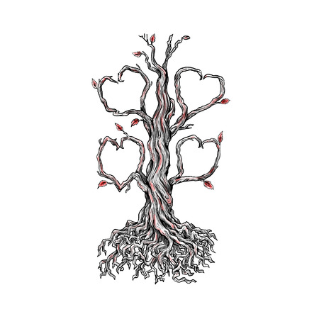 Tattoo style illustration of  a gnarly old oak tree with roots and branches forming a heart on isolated background.