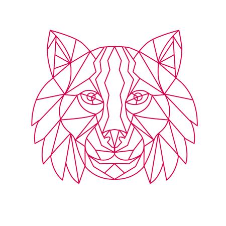 Lynx ボブキャット、中型の野生猫、フロントから見た頭のモノラル ライン図は、背景を分離しました。  イラスト・ベクター素材