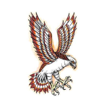 Tattoo style illustration of Osprey, Pandion haliaetus also called sea hawk, river hawk, fish hawk swooping viewed from side. Stockfoto