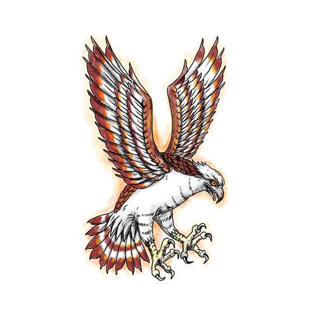 Tattoo style illustration of Osprey, Pandion haliaetus also called sea hawk, river hawk, fish hawk swooping viewed from side. Archivio Fotografico