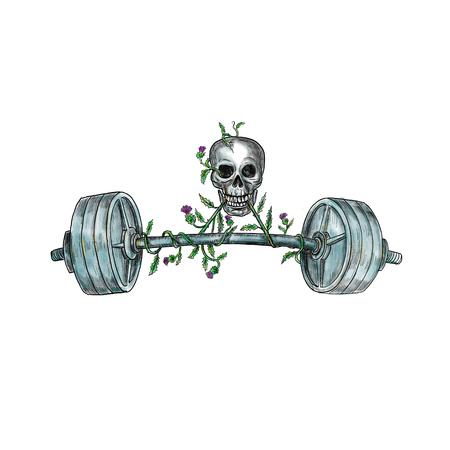 De illustratie van de tatoegeringsstijl van een schedel die een zwaargewicht barbell met wijnstok van Schotse distel op geïsoleerde achtergrond opheffen.