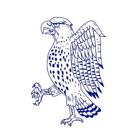 サイドビューは行進ワシタカ科デッサン スケッチ スタイル イラスト シャープ-shinned ホーク、中型昼行性猛禽の家族の背景を分離しました。  イラスト・ベクター素材