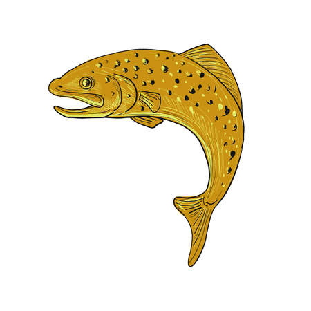 Drawing sketch style illustration of a a spotted brown Trout jumping viewed from side on isolated background.
