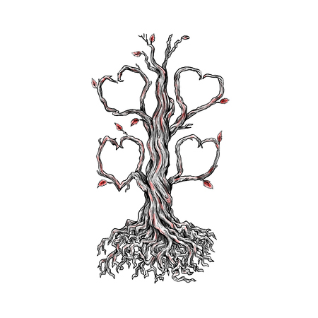 Tattoo style illustration of  a gnarly old oak tree with roots and branches forming a heart on isolated background. Stock Illustration - 87996007
